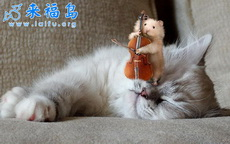 给猫拉大提琴的小白鼠