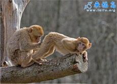猴子也看妇科医生