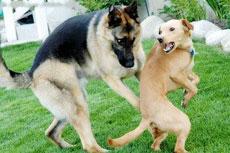 下流的狗狗