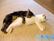 枕着别人睡觉什么的最爽了!有木有!
