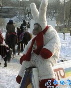我真的是一只兔子