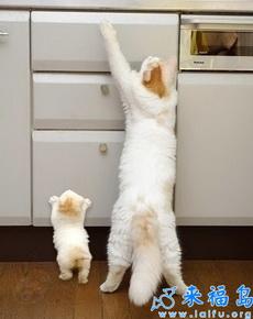 爸爸:儿子,等东西掉下来你接住就快跑啊! 儿子:知道啦,爸!又不是第一次了。