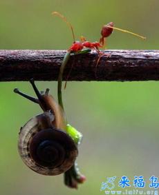 坚持住啊,你蚂蚁大哥在救你啊!
