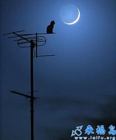 夜深的时候,我,偶尔也想想未来……