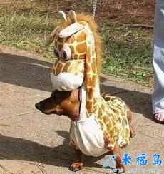 Yo soy jirafa.