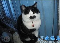 你才是卓别林,你才是希特勒,你才是老蒋,你才是日本鬼子!
