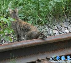 Ya viene el tren, ten cuidado con tu colita!!