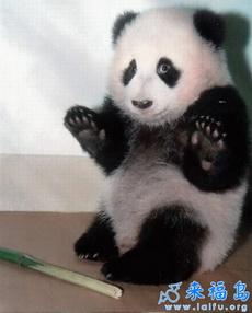 我投降,这根竹子真的不是偷来的