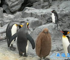 莫非这是北极熊与南极企鹅的结晶?