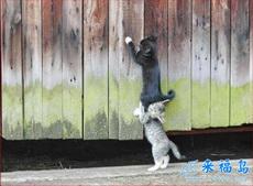 互相帮助,好友爱