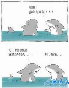 我擦,有鯊魚