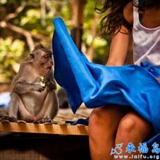 Mono chiquito, Qué tú viste?