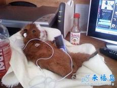 小老鼠听音乐好惬意