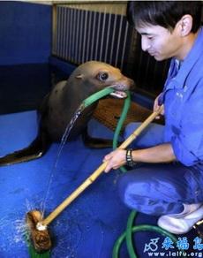 海洋动物馆的工作人员打扫卫生不愁没帮手