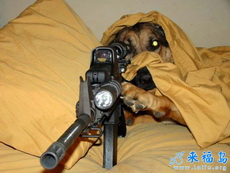 狗狗特工队