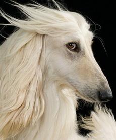 你才是马呢,你全家都是马!没见过用海飞丝的狗狗啊!!