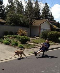 养条活泼的狗也不见得是件坏事