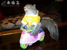 快樂松鼠騎車車
