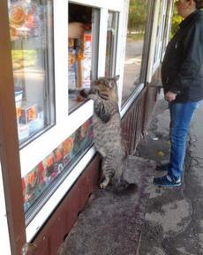 老板,快给我找钱!