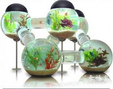 这个鱼缸太复杂了