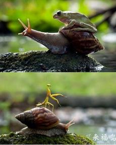 蜗牛一直被其他动物欺负啊