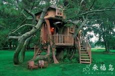 順樹而建的木屋