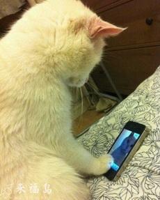 小猫也会用iPhone视频聊天了!