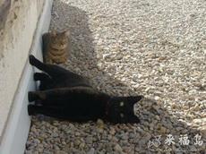 两个无视重力的猫