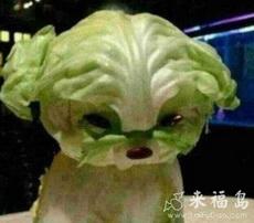 火锅店里看到如此激萌的生菜,你还忍心吃吗?