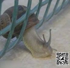 Snail Fail