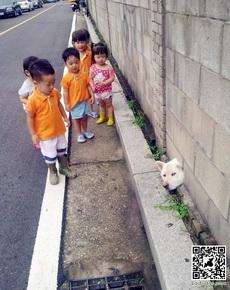狗狗被卡住了,然后就被围观了