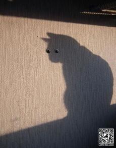 """猫星人的""""眼睛"""""""