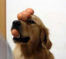 What keeps the dog on the nose?