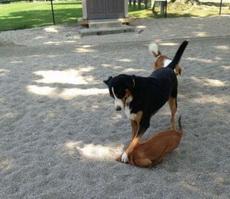 Dog Park Politics