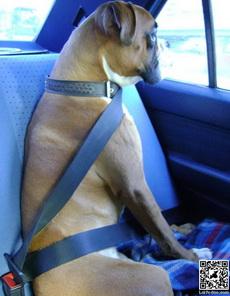 不带安全带是要扣分的