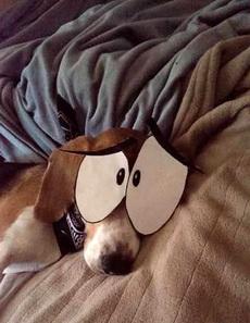 恶搞睡着的汪星人!