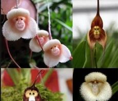 这种花到底叫什么?长得好像猴子啊!