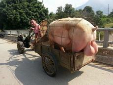 这个猪猪看得我好蛋疼啊