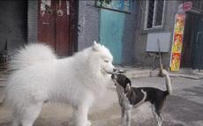 传说中屌丝和白富美的爱情