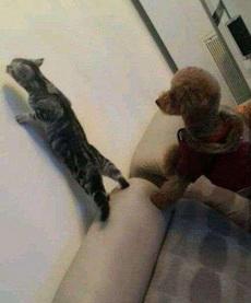 阿喵,你在看啥呢,带我一个!