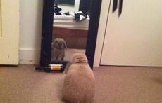 每天对着镜子喊十遍我是瘦子我是瘦子!,坚持一个礼拜,镜子就会觉得你特别不要脸。