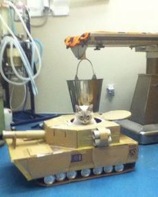 没看过坦克啊,喵了个咪的