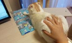 别人都用鼠标,我却独爱猫标