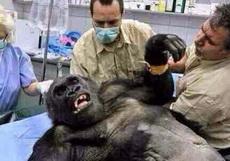 据说大家最近都喜欢看这部《来治猩猩的你》,哪里有下,求介绍。