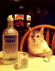 还愣着干嘛,给喵爷我倒酒啊!