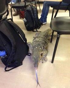 同学带他的宠物来上学
