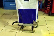 什么,你家猫?我没见,我只是个袋子