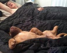你们这睡相还可以更同步一点么!