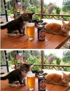 啤酒什么的最好喝了!