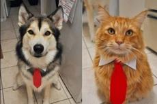 主人你说说,我们哪个比较帅?
